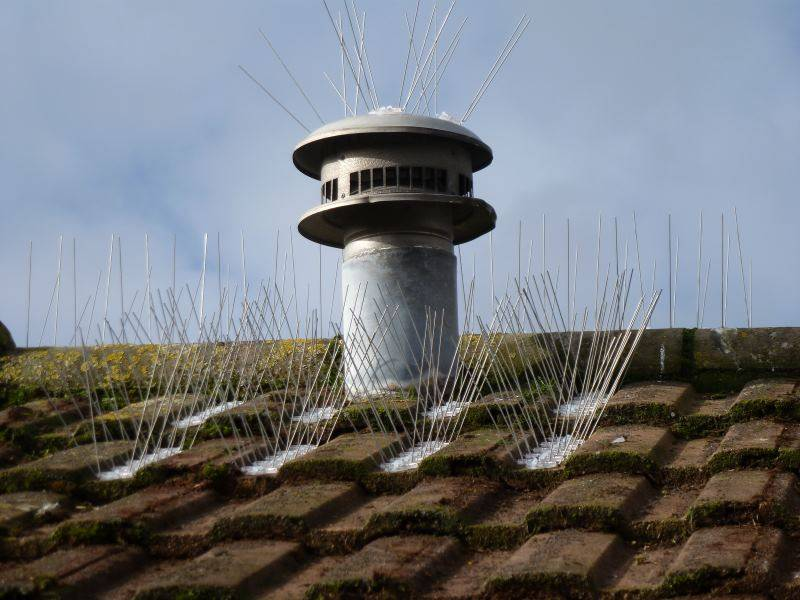 Roof bird spikes on tiled roof