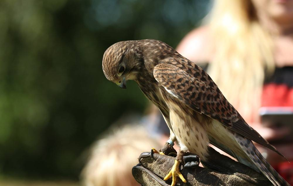 falconry proofing method