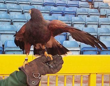 falconry bird control