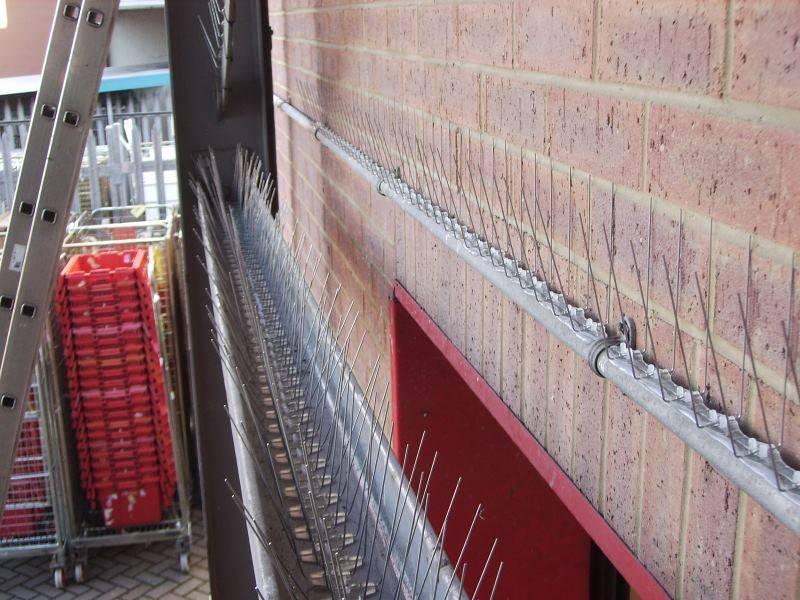 Bird spikes along wall